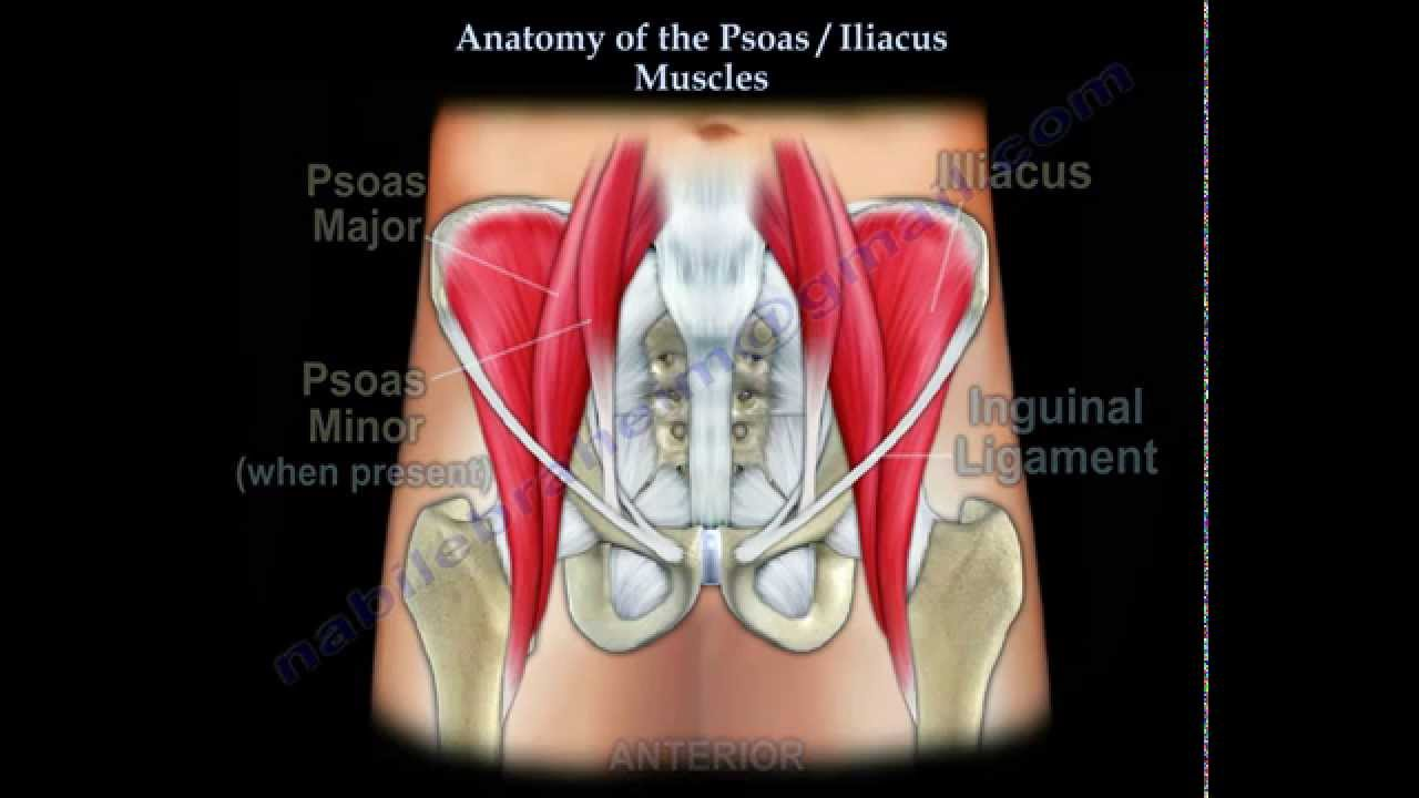 anatomy of the psoas iliacus muscles everything you need to know