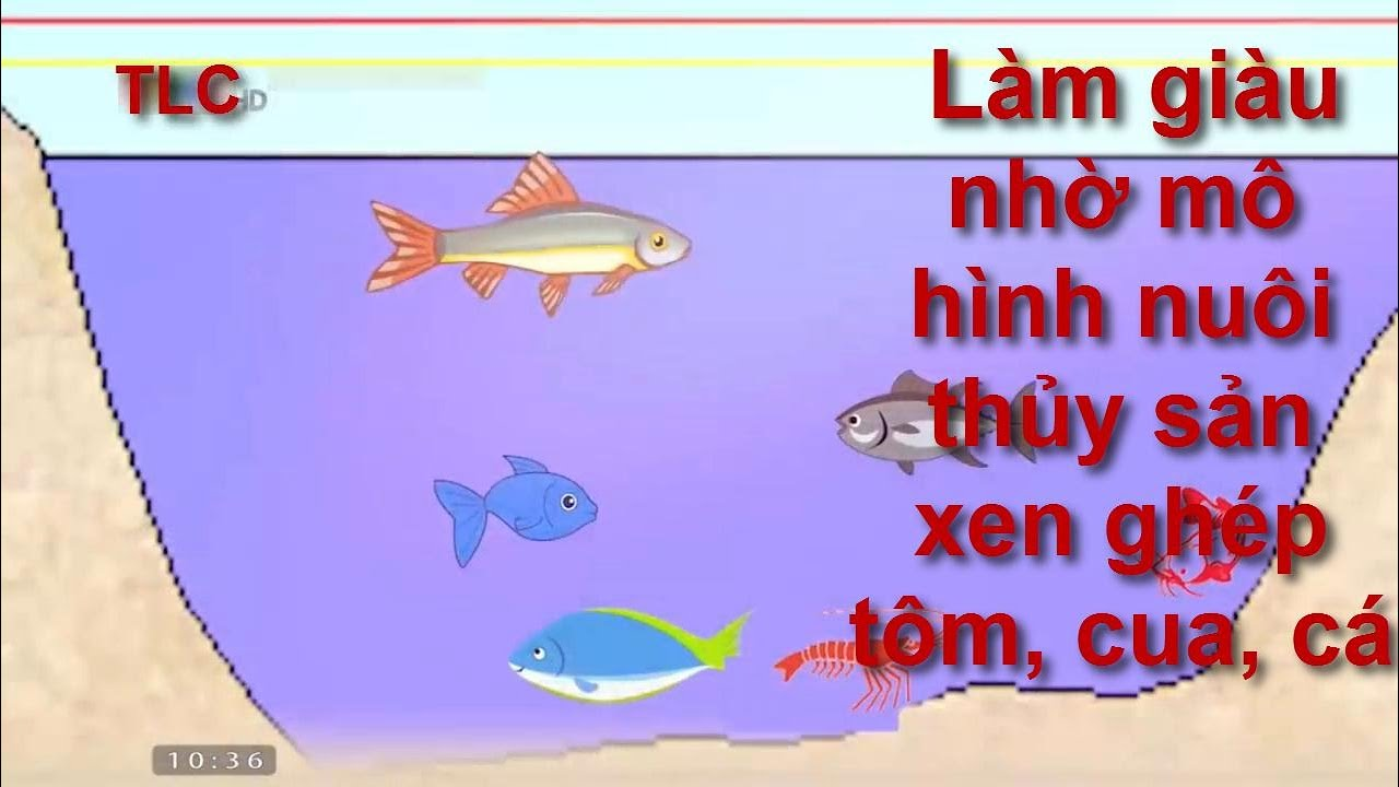 cách làm giàu từ mô hình nuôi thủy sản xen ghép tôm, cua, cá