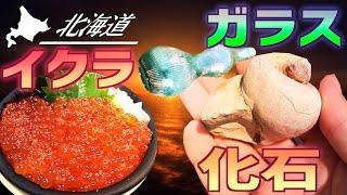 【北海道の未公開ファイル】化石!ディギング!イクラ丼!!北海道お宝探しの旅!未公開の短編集!