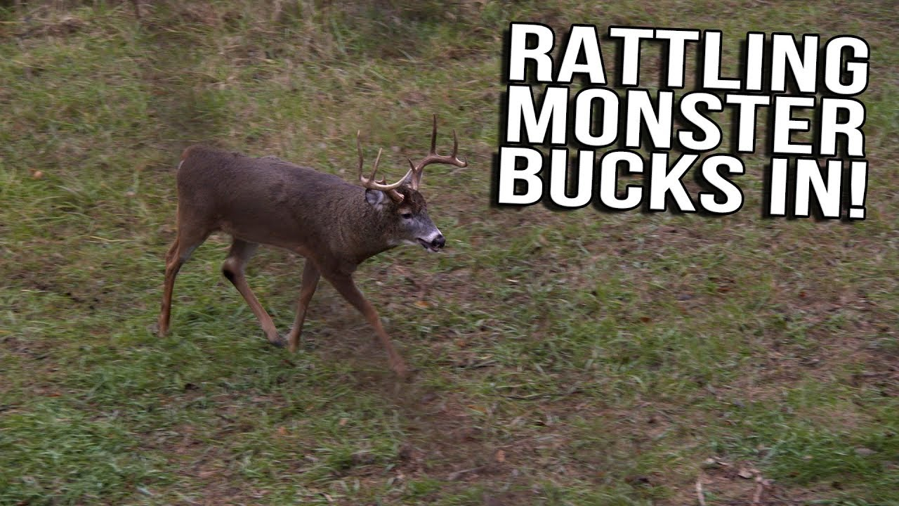 Just the Hunt- SemiLive Hunting Action- Rattling Monster Bucks In!