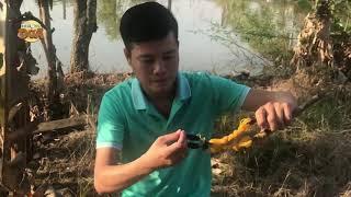 Khương Dừa về quê hái sạch cây xoài của ngoại bằng..... dàn ná?