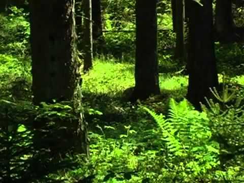 Музыка природы. Живой лес.mp4