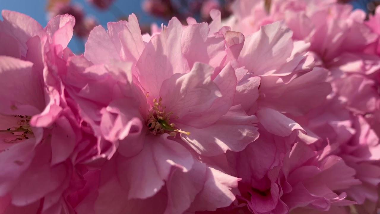 春よ、来い フルート4重奏