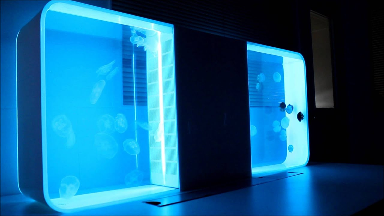 Two Cubic Jellyfish Aquariums Back To Back Youtube