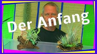 Ein ewiges oder zeitweise Terrarium? für Pflanzen.