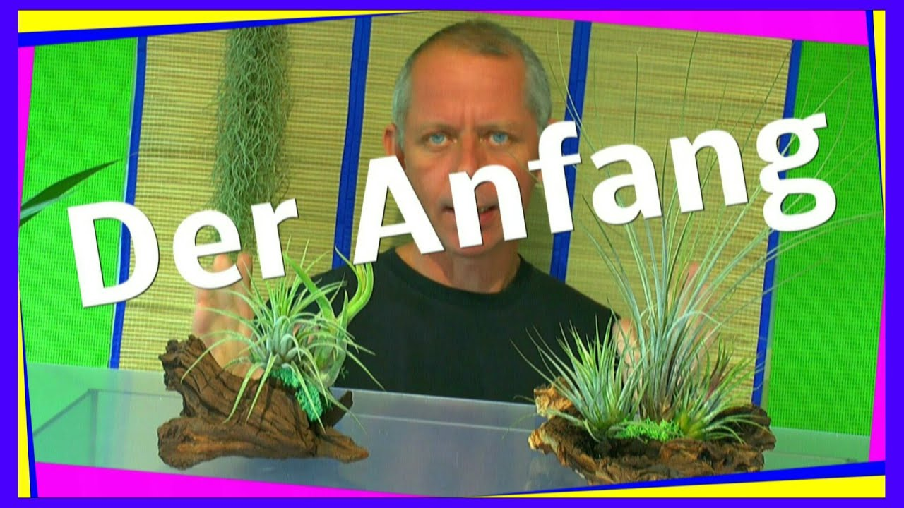 ein ewiges oder zeitweise terrarium f r pflanzen youtube. Black Bedroom Furniture Sets. Home Design Ideas