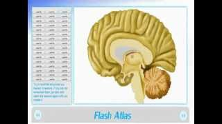 Learn a complete neuroanatomy in just 2 WEEKS  With NeuroAnatomy 3d Software & Flash Brain Anatomy