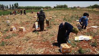 غرف الزراعة التابعة للنظام تعترف بتدهور أضرار القطاع الزارعي بحوالي 260 مليار لير