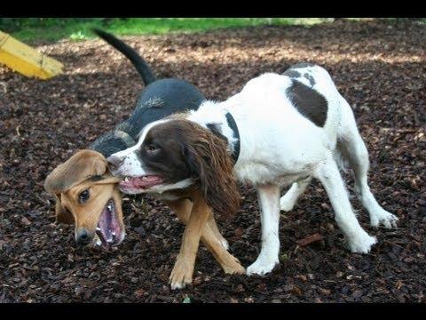 Dog Play Styles