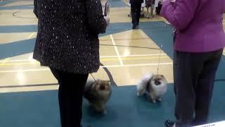fylde dog show 8