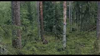 Россия — царство тигров, медведей и вулканов