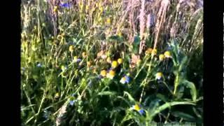Biocenoza łąki - Ekosystemy