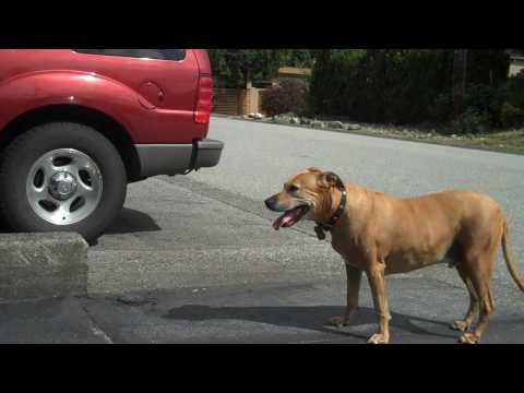 dog-ramp-review---protect-your-older-dog-from-injury