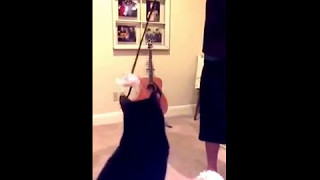 Cat's audition tape for the new Rocky movie, Creed (2015)