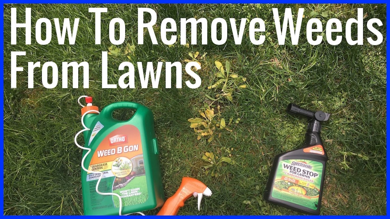 How to get rid of lawn weeds - How To Remove Weeds From Lawn Ortho Weed B Gon And Spectracide Weed Stop