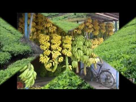Kerala, A Land of Great Natural Beauty