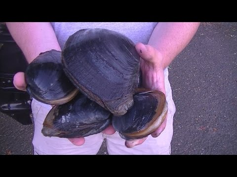 WA (Shell)fish Quest EP 29: Horse Clam