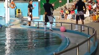Dolphin show at Sentosa, Singapore