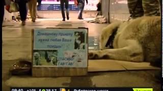Столичные мошенники используют животных для вымогательства денег