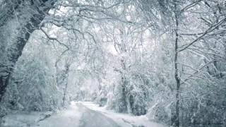 Blizzard Sounds for Sleep, Relaxation & Staying Cool | Snowstorm Sounds & Howling Wind in the Forest