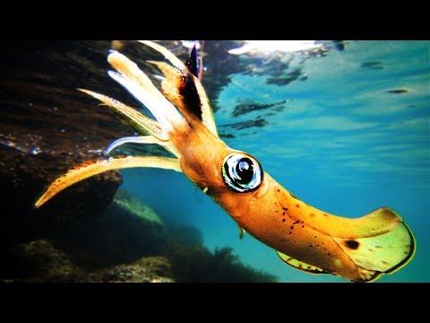 Squid Catch Clean And Calamari Cook Up