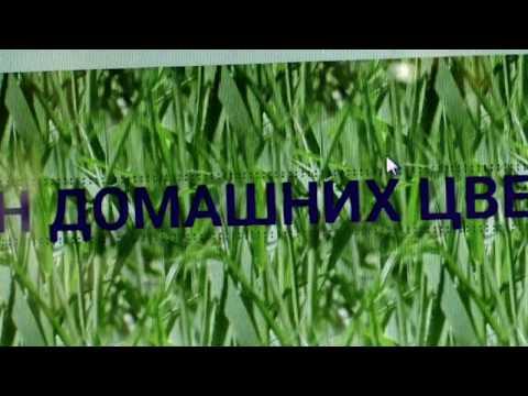 Цветы Бугаевой:  Как делать заказ на нашем сайте