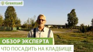 Что посадить на кладбище(В этом видео наш эксперт расскажет про растения которые можно посадить на кладбище. Если Вы хотите приобрес..., 2015-02-25T10:58:55.000Z)