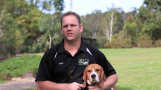 Pest Guru: Gold Coast Termite Detection Specialists