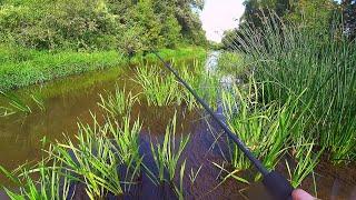 ЛУЧШАЯ РЫБАЛКА В ЖИЗНИ на домашней речке на ультралайт Куча рыбы на ОДНУ БЛЕСНУ Спиннинг