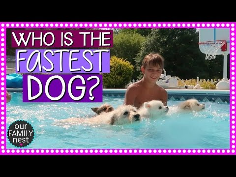 WHICH DOG CAN SWIM THE FASTEST CHALLENGE