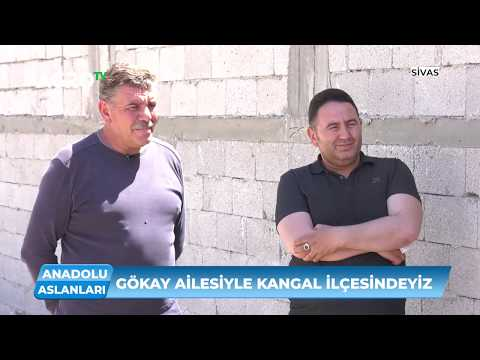 Kangal Köpekleri Neye Göre Ün Kazanır? / Agro TV