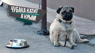 С собакой в Крым на машине Поломка Крымский мост Chubaka Vlog