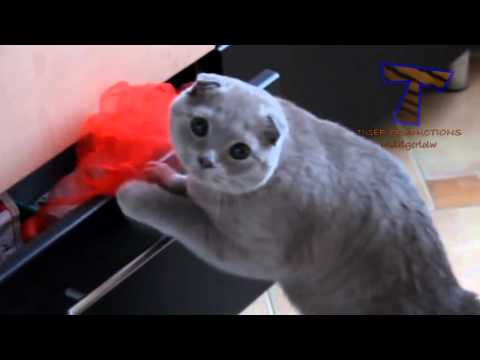 [Relax with Cat] Cat meowing funny copters (P26)