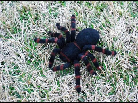 Giant Tarantula