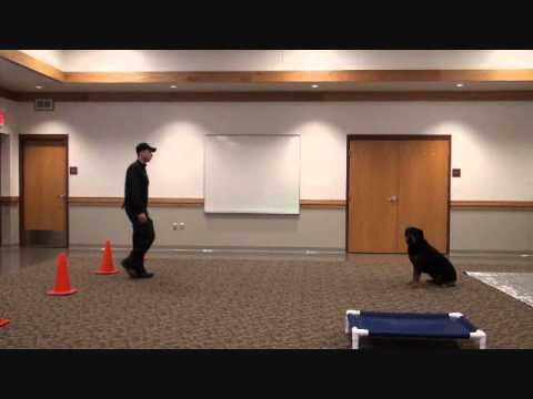 Dozer (Rottweiler) Boot Camp Dog Training demonstration