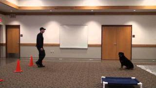 Dozer (rottweiler) Boot Camp Dog Training Demonstration