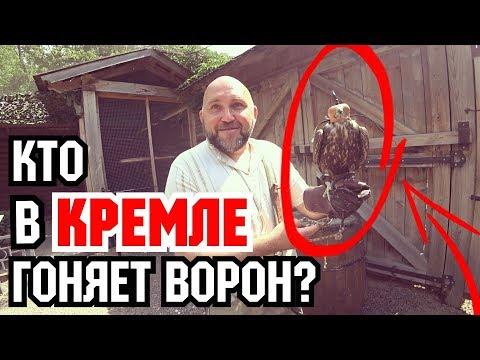Главный сокольничий Москвы. Вместо урока истории.