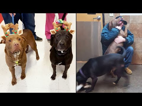 Staff Watches Crying Vet Forced To Give Dogs Up— Looks Closer And  Gave Him A Painful News