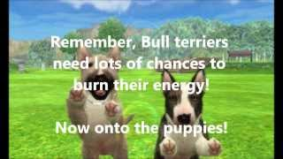 Nintendogs+cats: Bull Terrier Litter! 2 Puppies Available For Adoption