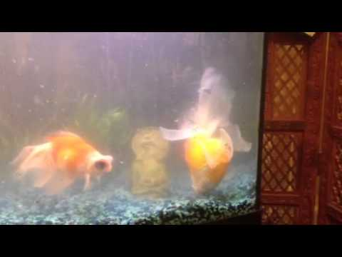 Over Feeding Your Fish