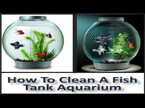 How To Clean A Fish Tank / Aquarium