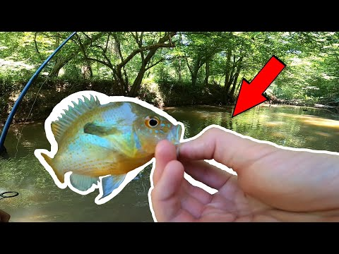 Creek Fishing For BEAUTIFUL Fish At Anne Springs Greenway!!