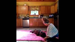How To Teach Your Dog To Crawl