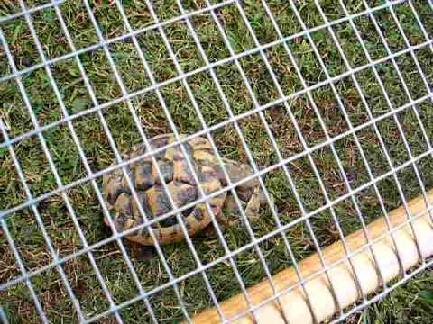 Tartarughe di terra youtube for Luce per tartarughe