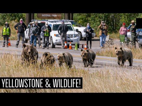 Yellowstone National Park   VAN LIFE EDITION