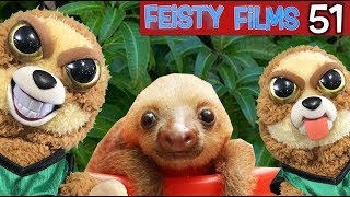 Who Let the Sloths Out?! Feisty Films Episode 51