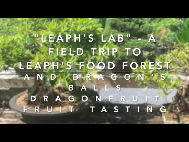 Leaph's High Density Food Forest &