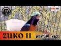 Isian Mewah Cililin Kapas Tembak Konin Zuko Ii Omkicau(.mp3 .mp4) Mp3 - Mp4 Download