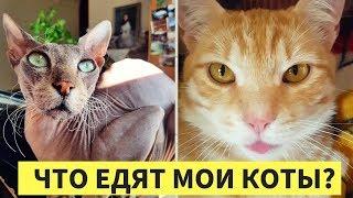 ЧТО ЕДЯТ МОИ КОТЫ? Здоровая еда для кошек.