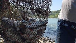 Рыбачим на свиную печень. Пьём из реки.